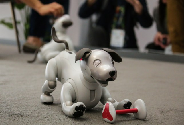 Sony's adorable new Aibo comes to the US in Sept, priced at ,899