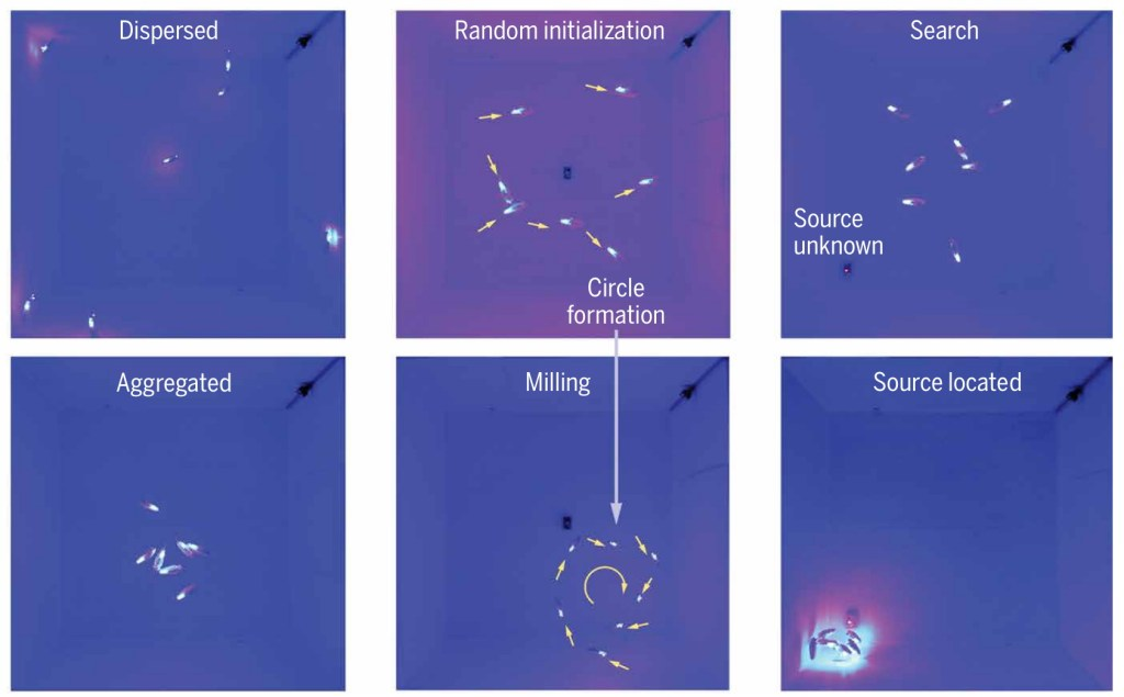 """Images showing how """"bluebots"""" swarm intelligently and find each other."""