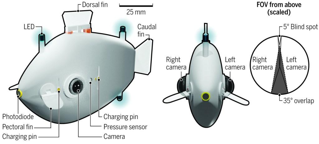 Diagram of a fish-shaped robot