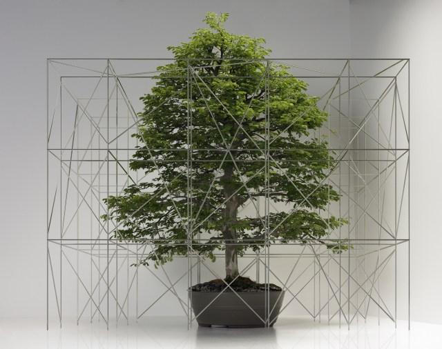 bonsai tree with miniature scaffolding