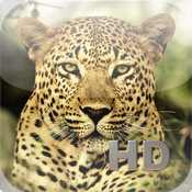 App Review – Animal Kingdom HD