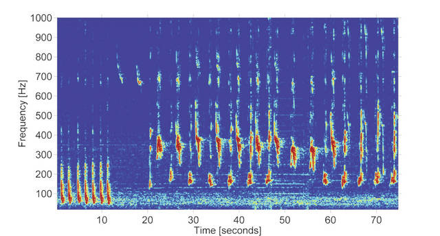 Google's Machine Learning Model Can Decode Humpback Whale Songs 2
