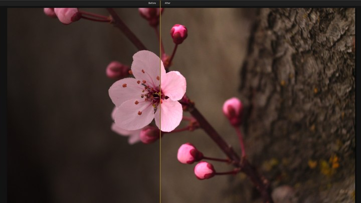Sakura Flower picture wich was processed in Luminar and the devide is shawing the work of photo editing software