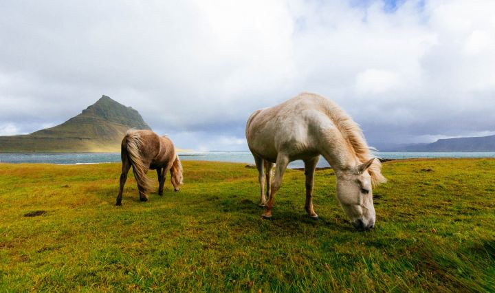 Two horses on the meadow. A horse is one of the symbols of Luminar