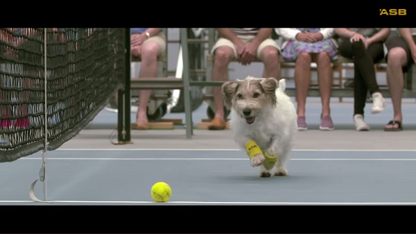 ball-boys-dog