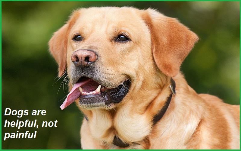Best Dog Slogans images