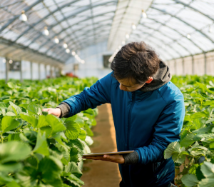 Vineyard Chile Agritech