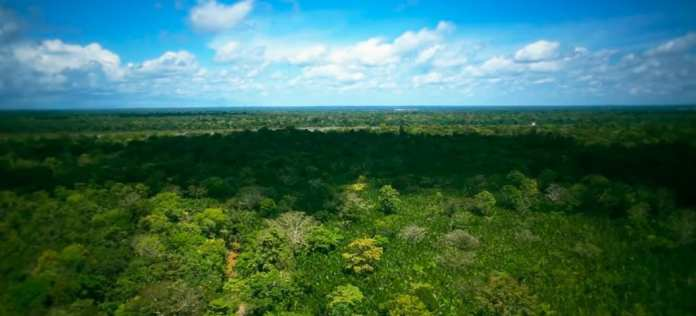 DJI drones are used to keep an eye on the health of the Amazon rainforest
