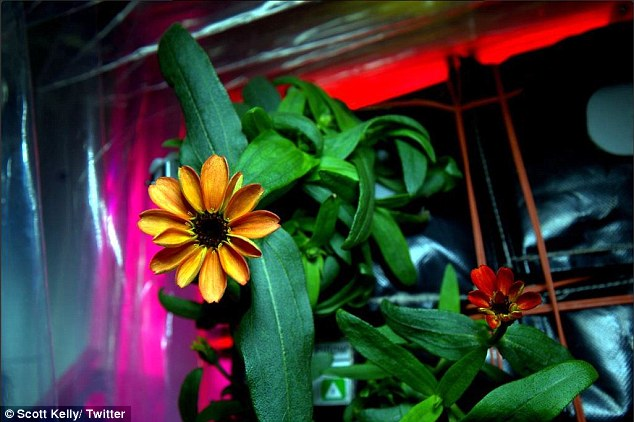 NASA Shares Image of the First Flower Bloomed in the Zero Gravity of Space