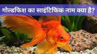 GoldFish Ka Scientific Naam Kya Hai