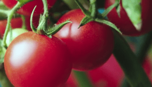 Grow Your Own Food With Kana Chan! http://techmash.co.uk/2018/02/13/kana-chan-hydroponic/