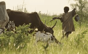 CEO Weekends: Senegal's Cattle Herders Benefit From Mobile App To Keep Track of Cows