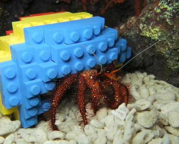 hermit crab lego shell legoland