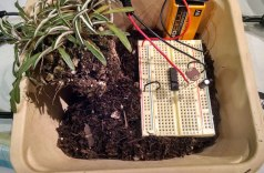 Photo-synth gardens!