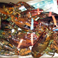 Lobsters (Wikimedia Commons)