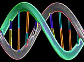 DNA strand (NSF)