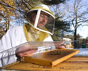 Jeffrey Pettis, of USDA's Bee Research Laboratory in Beltsville, Maryland