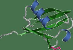 Illustration of ubiquitin molecule
