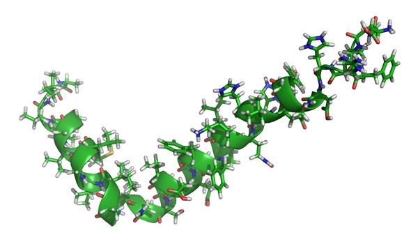 model of amyloid-beta peptides