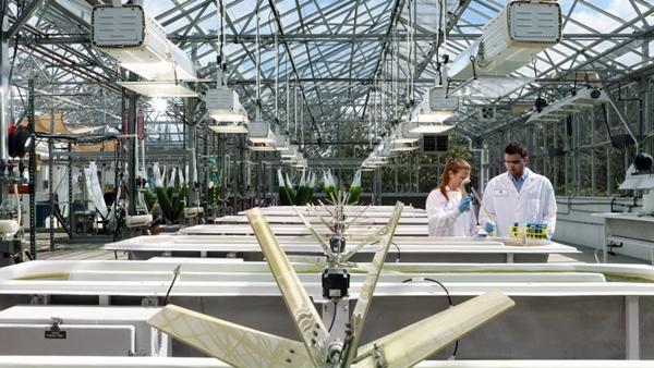 Algae scientists