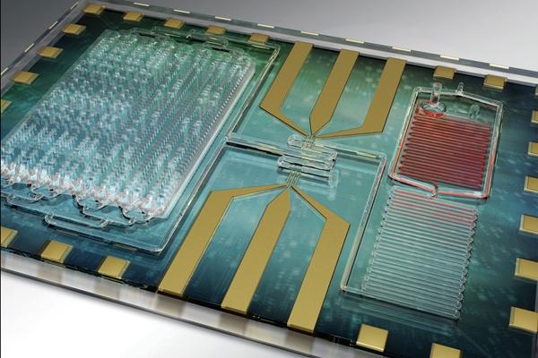 Sepsis testing chip