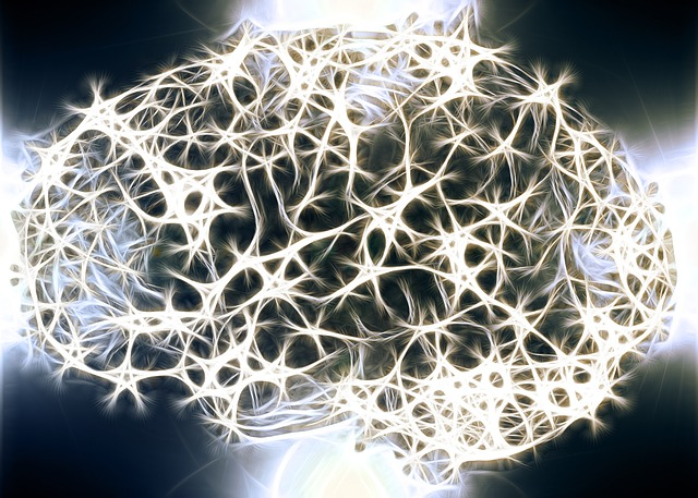 Brain cell networks