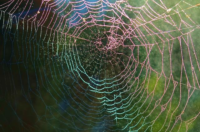 Moist spider web