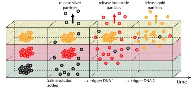 DNA nanoparticle release