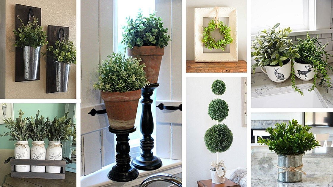 How to Get the Most of Indoor Plants?