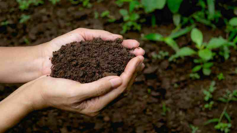 How To Get Rid Of Soil Mites Fast