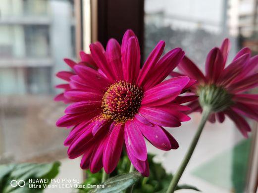 P40pro_foto_6