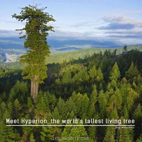 world's tallest living tree - interesting fact