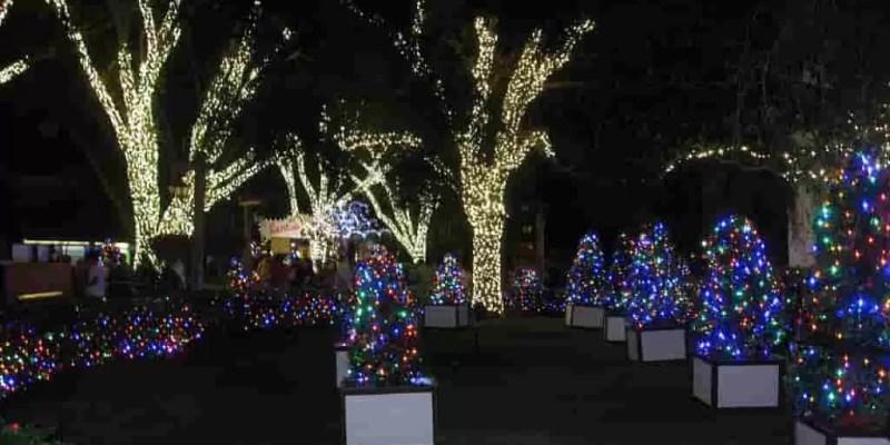 Indoor tree lighting