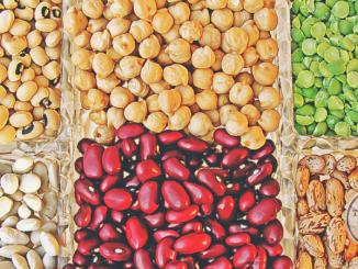 rośliny strączkowe nasiona fasola soja groch soczewica