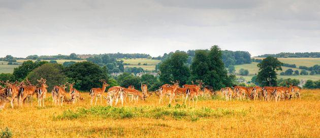 Deers, , , HDR
