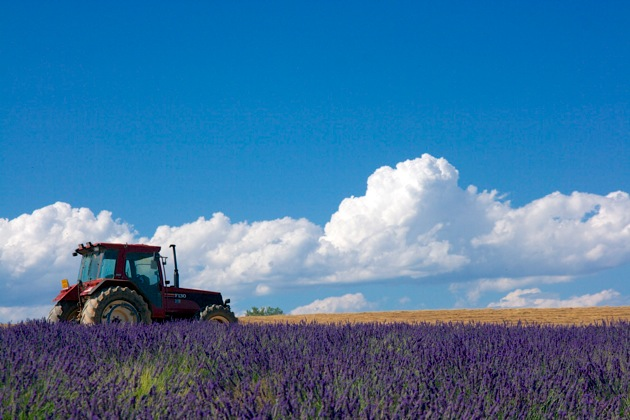 tractor-lavender-provence
