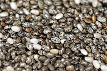 sabja seed