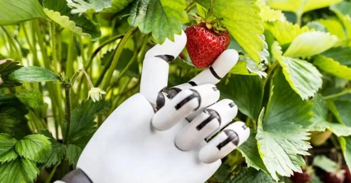 AI in Nepali Agriculture