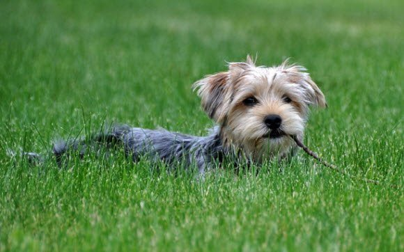 Free Download Dogs in Summer Windows 7 theme Dog in Grass