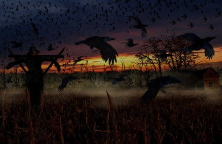 Scary Crows : Scary Halloween Wallpaper