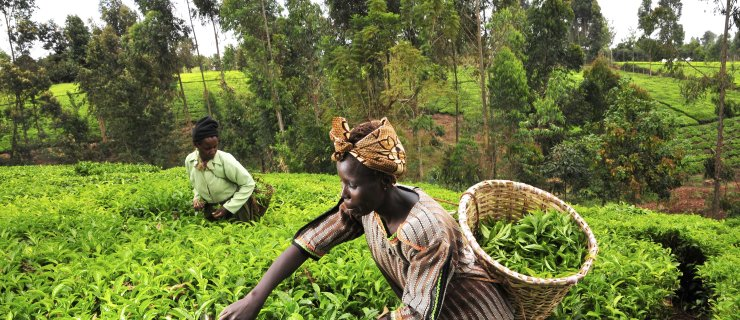 Complete Farmer To Expand To Ivory Coast; Launch Of Mobile App Imminent