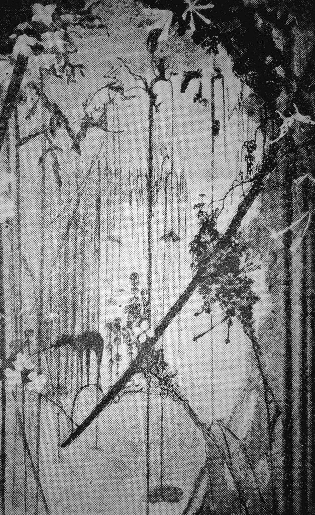 Džiungliai - Marso flora ir vabzdžiai