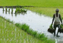 Budget 2018, Arun Jaitley, Narendra Modi, Agriculture, KisanKraft, MSP for Farmers, Tech for Farmers