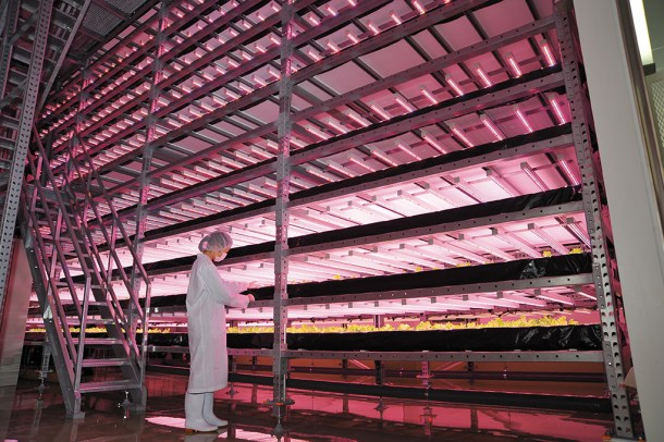 This indoor farm in Japan is state-of-the-art, growing salad greens at high speed but high quality. (photo courtesy Philips)