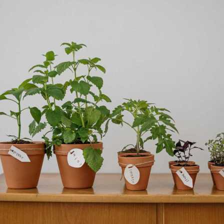 A series of plants