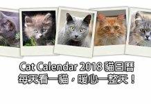 Cat Calendar 2018