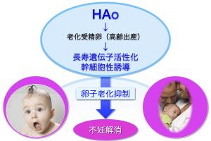 HA4-卵子老化 改定150824