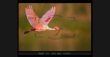 Nikon DSLR Tips & Tricks
