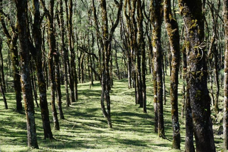 Hutan Pinus Fatumnasi