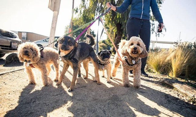 How to start a dog walking business - TechRound